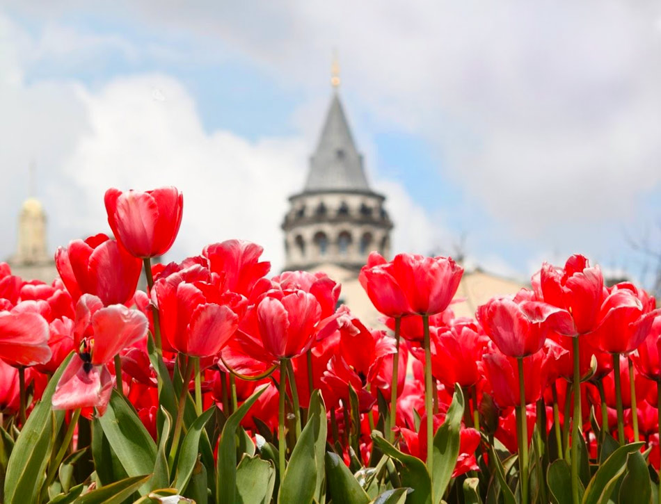 Фестиваль Тюльпанов в Стамбуле: когда и где смотреть