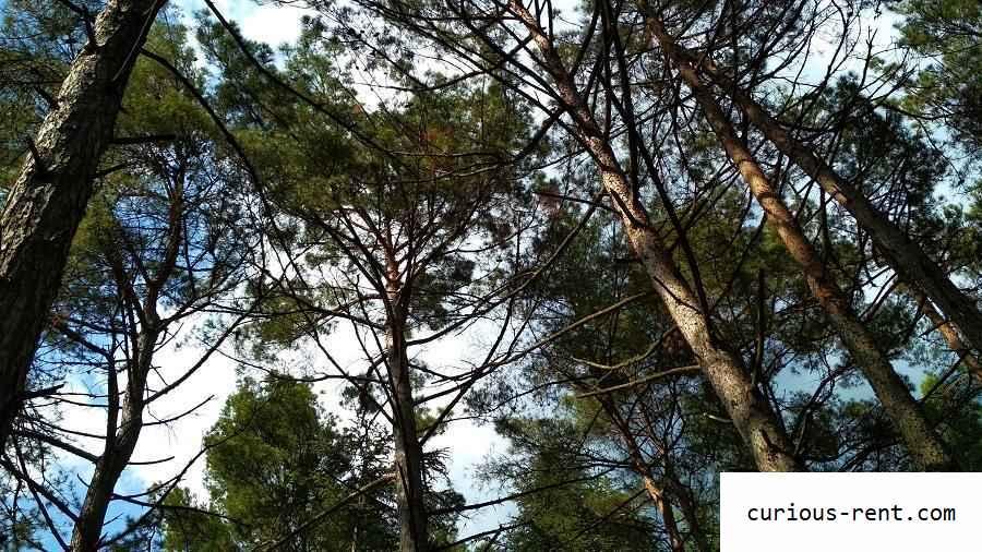 Ялтинский горно-лесной заповедник