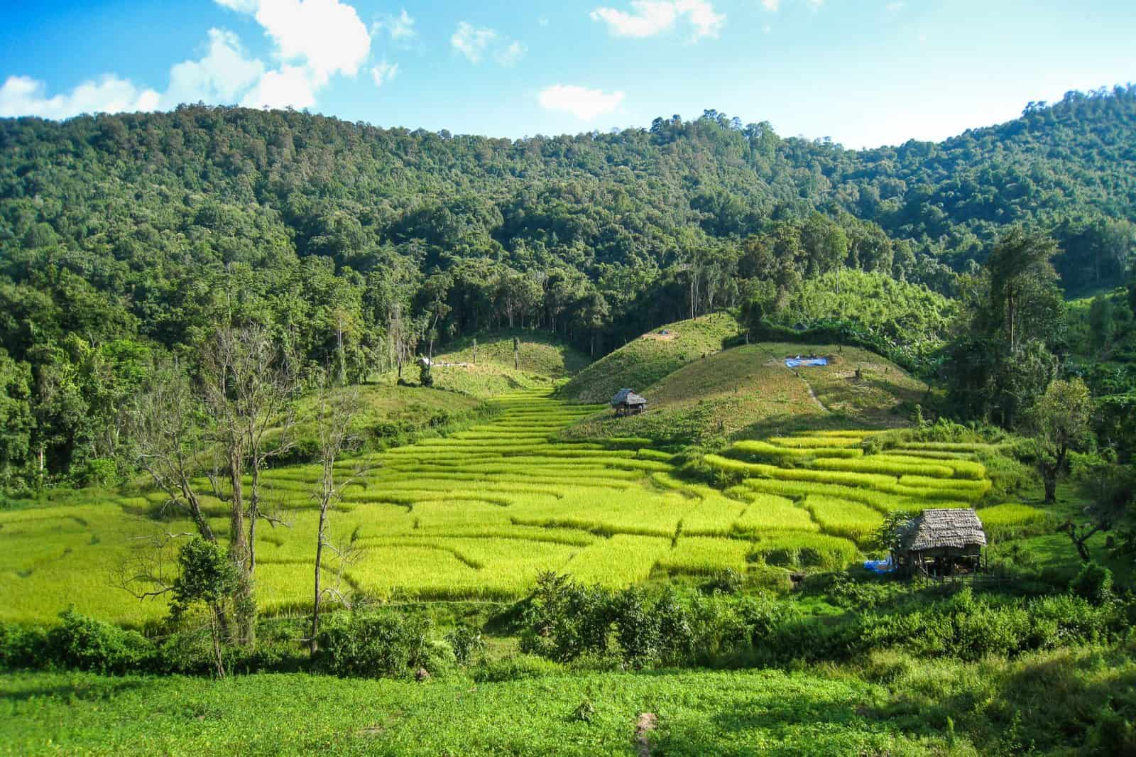 Джунгли треккинг в северном Таиланде