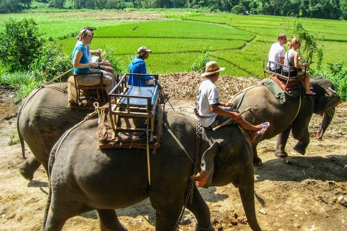 Слон едет